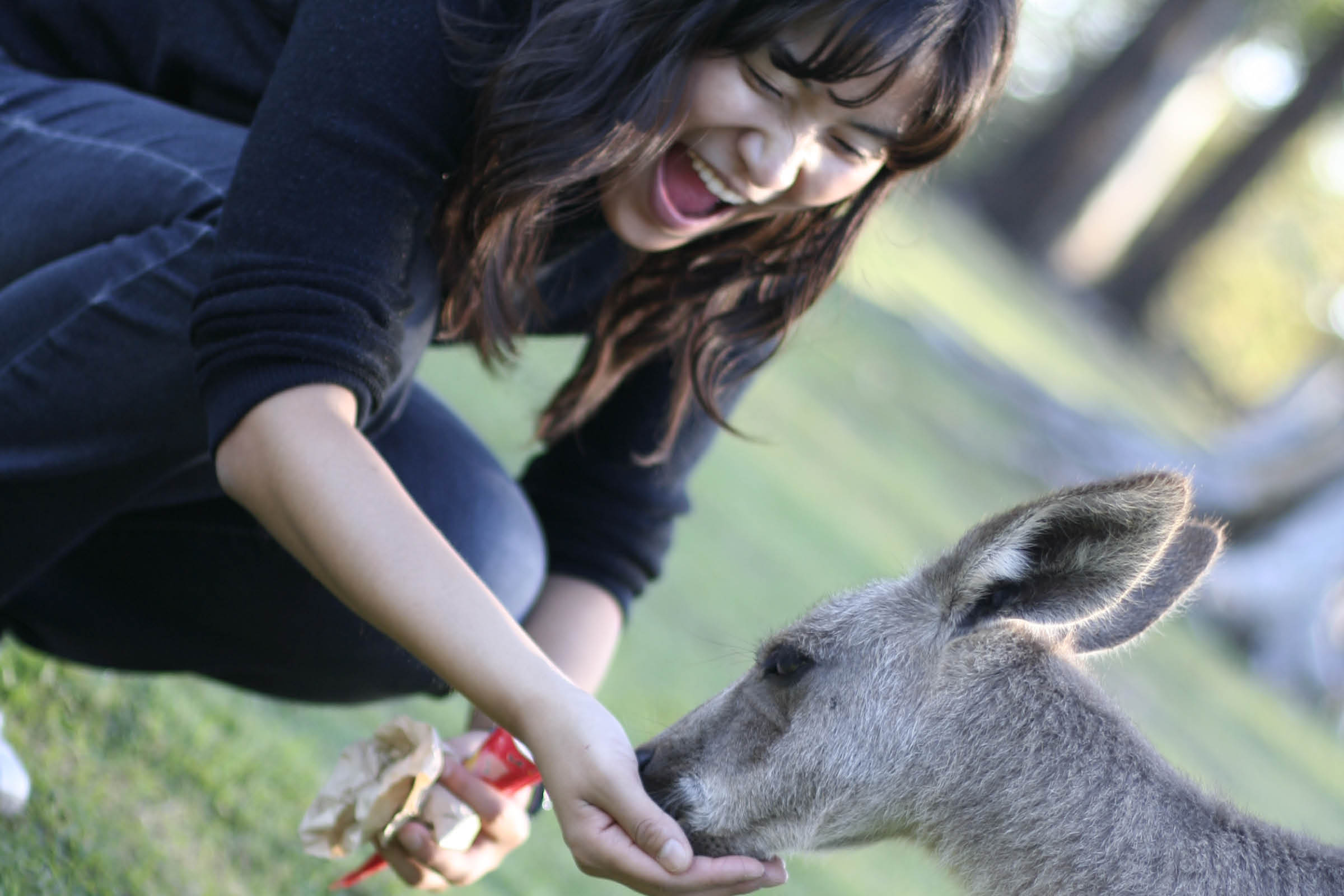 A woman feeding a kangaroo.