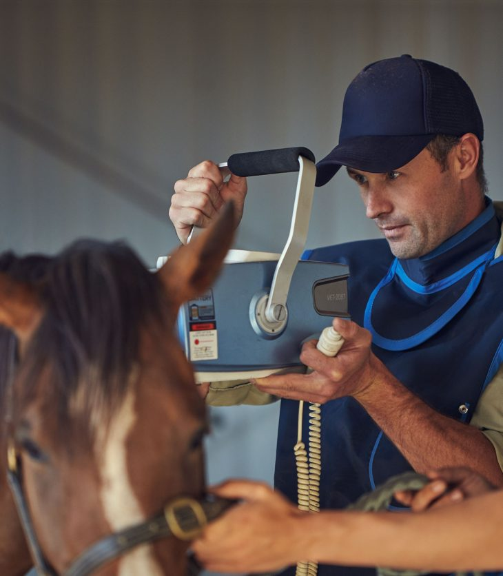 Andrew Lamont providing veterinary treatment to a horse