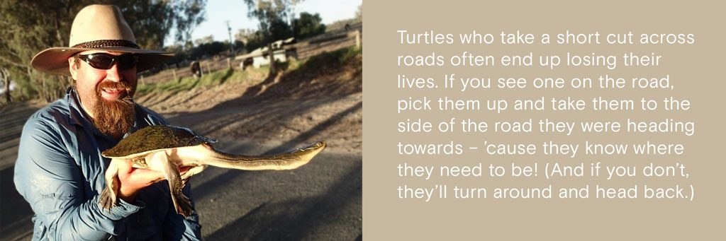 Turtles who take a short cut across roads often end up losing their lives. If you see one on the road, pick them up and take them to the side of the road they were heading towards – 'cause they know where they need to be! (And if you don't, they'll turn around and head back.)