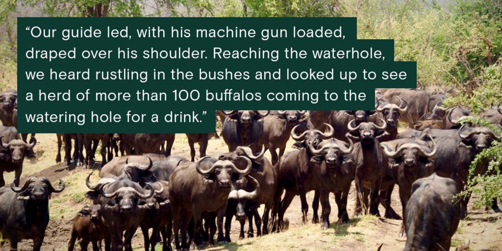 """Our guide led, with his machine gun loaded and draped over his shoulder. Reaching the waterhole, we heard rustling in the bushes and looked up to see a herd of more than 100 buffalos coming to the watering hole for a drink,"" said Emme Williams of her CSU Global trip to Africa."
