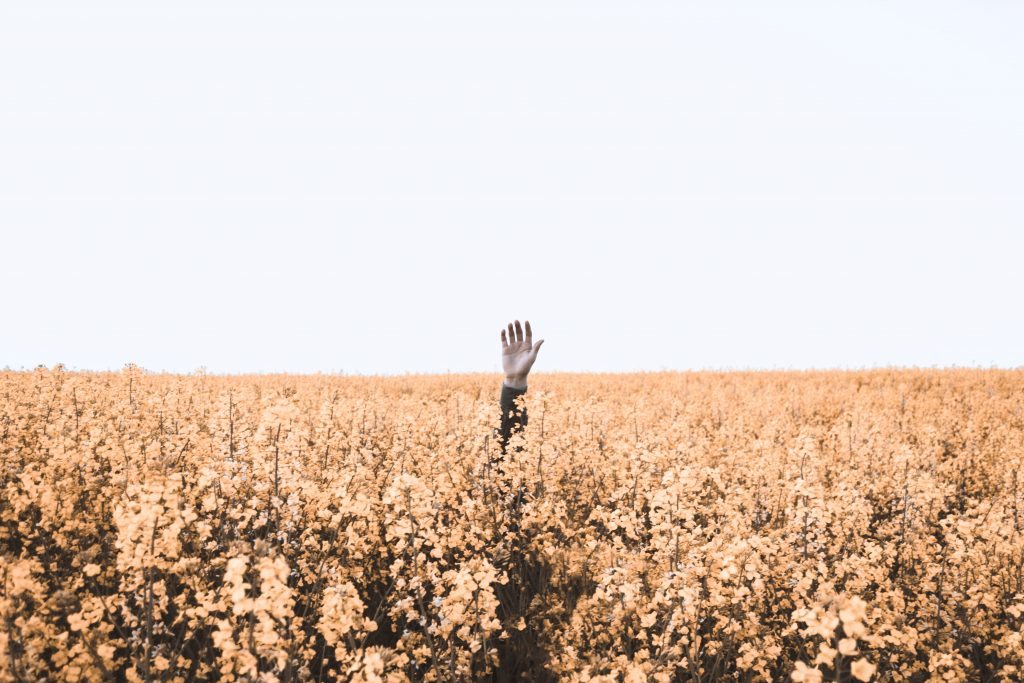 A single hand is raised in a crop field - indicating put you're hand up for help.